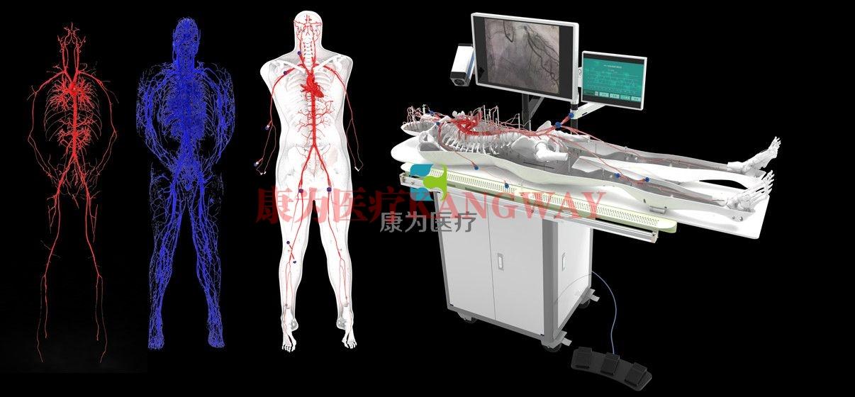 全身人体动静脉血管万博app最新版,动静脉血管及骨骼模拟系统