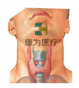 """""""康为医疗""""甲状腺查体检查诊断万博app最新版"""