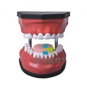 """""""康为医疗""""豪华型牙护理保健万博app最新版(32颗牙,可脱卸)"""