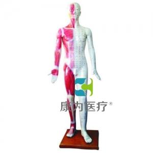"""""""康为医疗""""人体针灸万博app最新版178CM"""