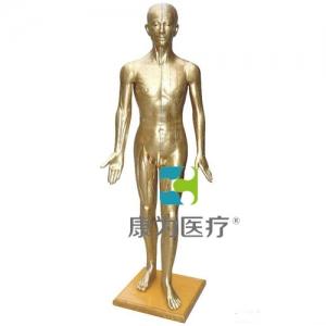 """""""康为医疗""""人体针灸万博app最新版178CM(青铜色)"""