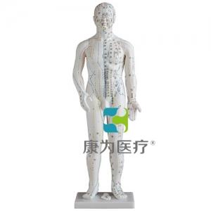 """""""康为医疗""""人体针灸万博app最新版48CM"""