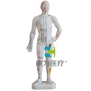 """""""康为医疗""""人体针灸万博app最新版26CM"""