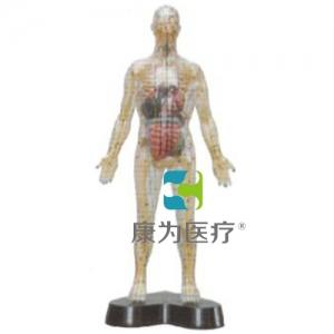 """""""康为医疗""""透明人体针灸万博app最新版(透明可见骨骼.内脏)"""