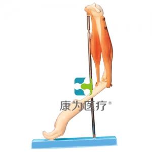 """""""康为医疗""""肘关节与肌肉示教万博app最新版"""