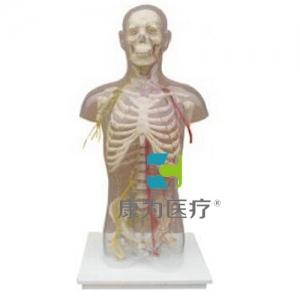 """""""betvlctor26伟德医疗""""男性躯干骨附主要动脉和神经分布"""