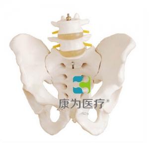 """""""康为医疗""""盆骨带两节腰椎万博app最新版"""