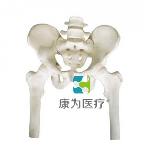 """""""康为医疗""""骨盆带两节腰椎附半腿骨万博app最新版"""