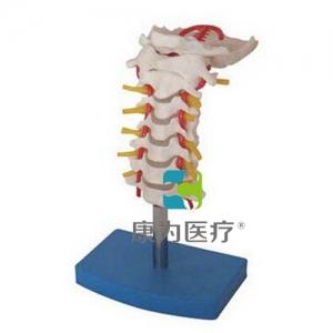"""""""康为医疗""""颈椎带颈动脉、后枕骨、椎间盘与神经万博app最新版"""
