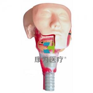 """betvlctor26伟德医疗""唾液腺及咽肌解剖BETVICTOR伟德网址"