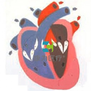 """""""康为医疗""""心脏收缩、舒张与瓣膜开闭演示万博app最新版"""