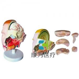 """""""康为医疗""""头解剖附脑万博app最新版(6部件)"""