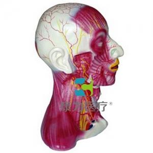 """""""康为医疗""""颈部中层肌肉血管神经万博app最新版"""