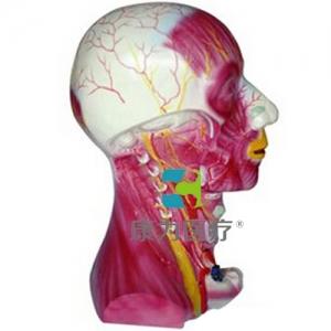 """""""康为医疗""""颈部深层肌肉血管神经万博app最新版"""