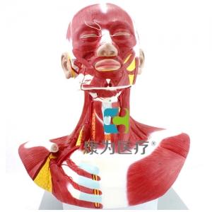 """""""康为医疗""""人体头颈胸肌肉解剖万博app最新版"""