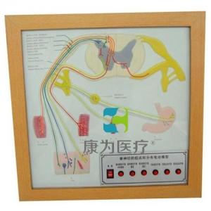 """""""betvlctor26伟德医疗""""脊神经的组成和分布电动BETVICTOR伟德网址"""