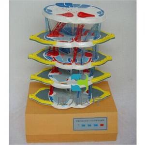 """betvlctor26伟德医疗""脊髓的内部结构和上、下行纤维电动BETVICTOR伟德网址"