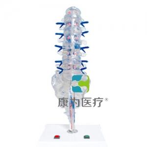 """""""康为医疗""""腰骶椎椎间盘和脊神经电动万博app最新版"""
