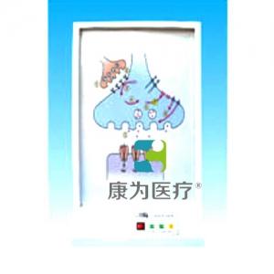 """""""康为医疗""""神经系统的化学通路电动万博app最新版"""