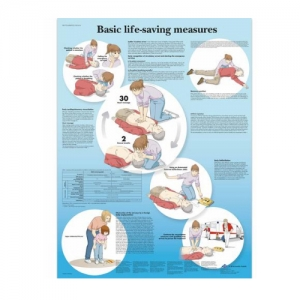 德国3B Scientific®Basic Life Support