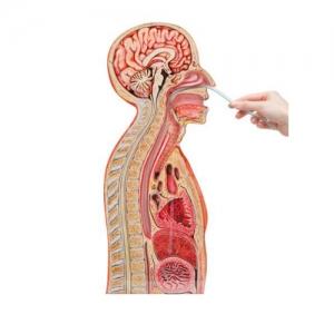 德国3B Scientific®鼻-胃插管BETVICTOR伟德网址