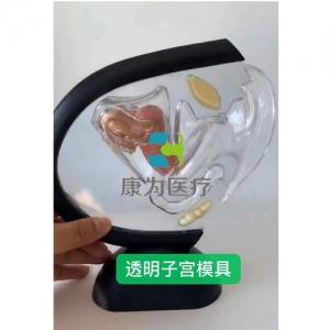 """""""betvlctor26伟德医疗""""透明子宫模具"""