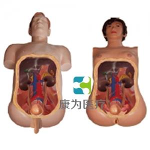 """""""康为医疗""""高仿真泌尿内镜技能训练人体万博app最新版"""