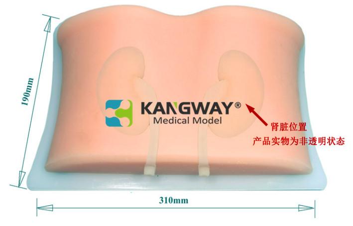 超声引导下肾脏穿刺术训练模块